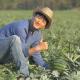 Farmers Take Care Melon - VideoHive Item for Sale