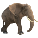 Elephant Walking - VideoHive Item for Sale