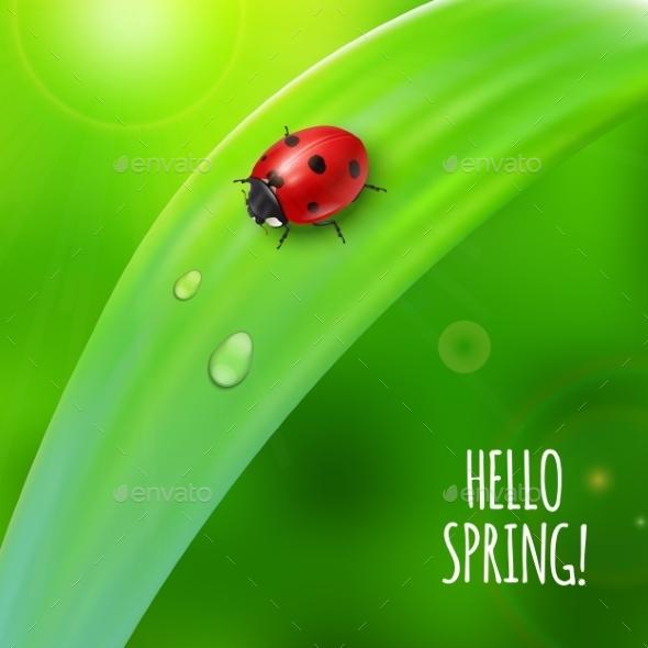 Ladybug on Green Grass - Flowers & Plants Nature