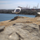 Seagull On The Rocks Near Harbor - VideoHive Item for Sale