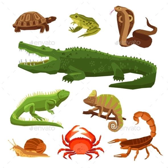 Reptiles And Amphibians Set - Decorative Symbols Decorative