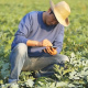 Farmer Using Technology With His Field - VideoHive Item for Sale