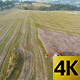 Combine Harvester Overtop Aerial  - VideoHive Item for Sale