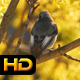 Little Bird Chirps on Tree  - VideoHive Item for Sale