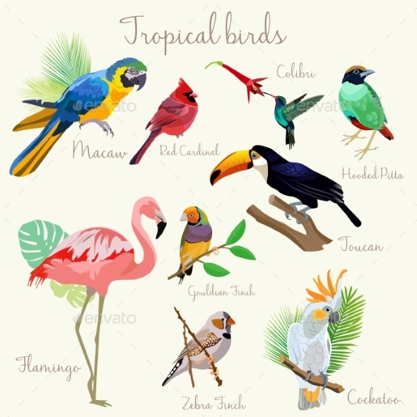Bright Color Exotic Tropical Birds Set Isolated - Flowers & Plants Nature