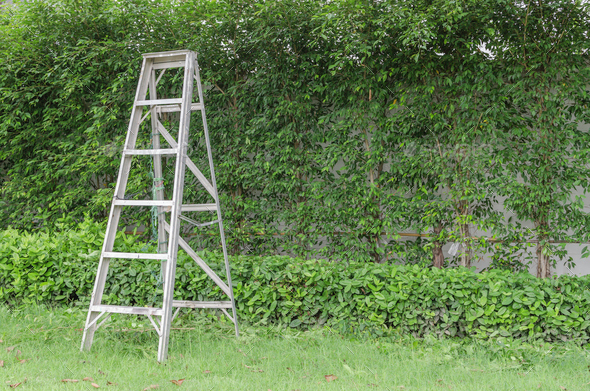 Aluminum ladder with wall green plant