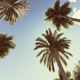 Retro Palms - VideoHive Item for Sale