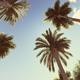 Retro Palms - VideoHive Item for Sale