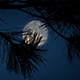 Moon Behind Spiky Tree Branches