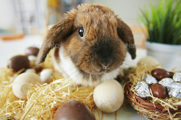 Easter pet - Stock Photo - Images