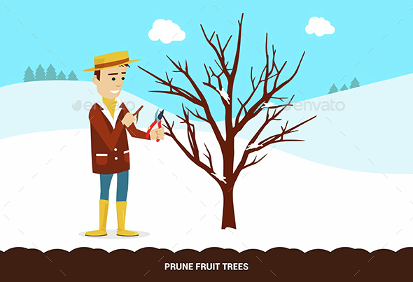 Prune Fruit Trees - Flowers & Plants Nature