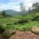 Fields Of Nuwara Eliya - VideoHive Item for Sale