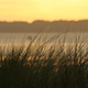 Harbour Sweetgrass at Sunset - VideoHive Item for Sale