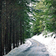 Road Through The Woods With Snow Falling - VideoHive Item for Sale