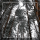 Winter Forest 2 - VideoHive Item for Sale
