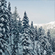 Ascending Snowy Mountain Side With Trees - VideoHive Item for Sale
