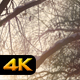 Snow Covered Branches of Tree in Sunset - VideoHive Item for Sale