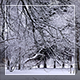 Winter Forest 3 - VideoHive Item for Sale