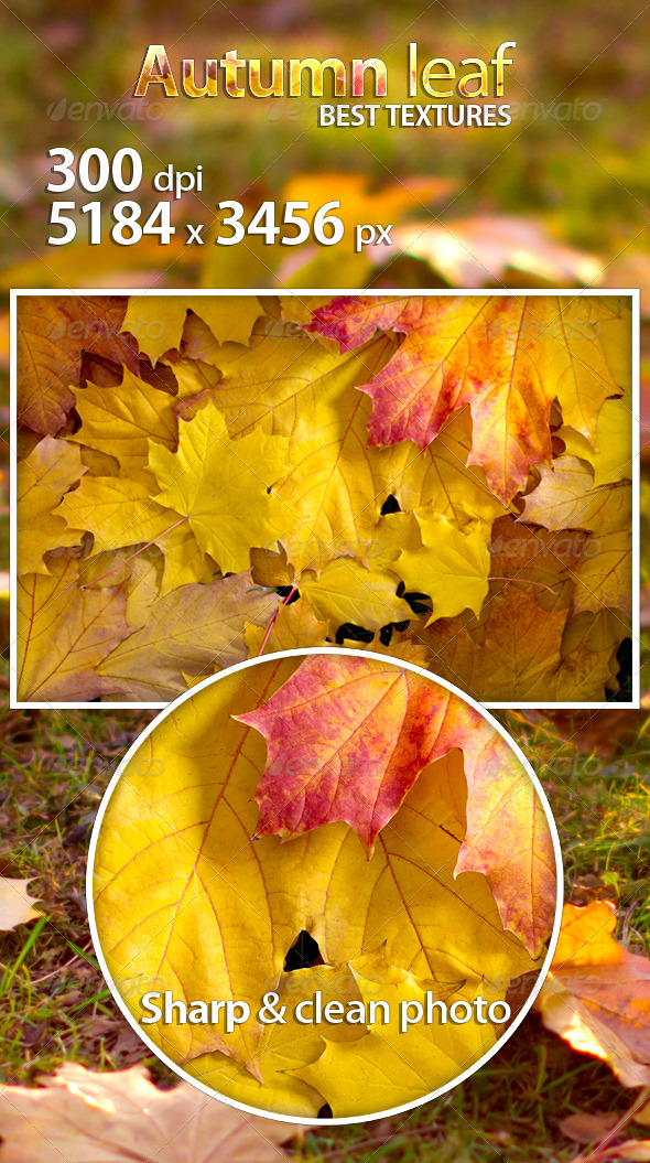 Autumn leaf - Nature Textures