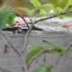 Ants Road - VideoHive Item for Sale