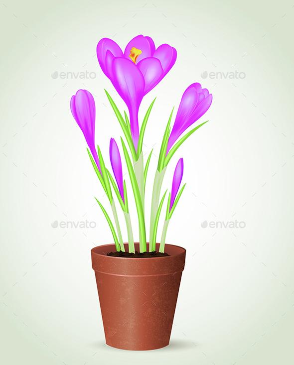 Violet Crocus in Flower Pot - Flowers & Plants Nature