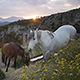 Horses Eating in the Mountain on Sunset - VideoHive Item for Sale