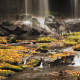Beautiful Cascade Waterfall In Autumn - VideoHive Item for Sale