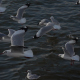 Flock Of Birds On Blue Sky - 14