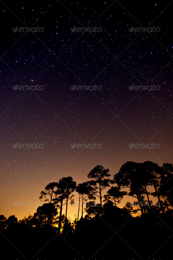 stars over forest - Stock Photo - Images