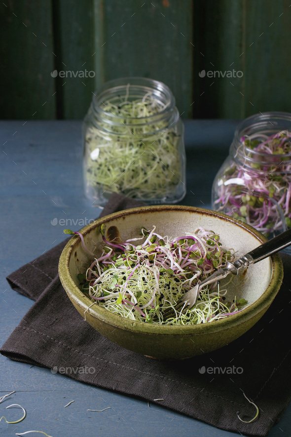 Fresh  Sprouts salad - Stock Photo - Images