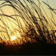 Sunset In The Grass - VideoHive Item for Sale