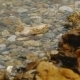 Colored Pebbles Under Water - VideoHive Item for Sale