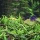 Fish In Aquarium - VideoHive Item for Sale