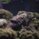 Actinia Seaweed Under Water - VideoHive Item for Sale