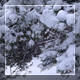 Winter Forest 5 - VideoHive Item for Sale