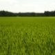 Green Grass In Field - VideoHive Item for Sale