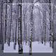 Winter Forest 6 - VideoHive Item for Sale