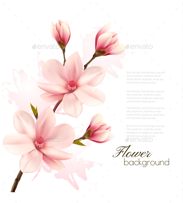 Spring Background with Blossom Brunch of Pink Magnolia - Flowers & Plants Nature