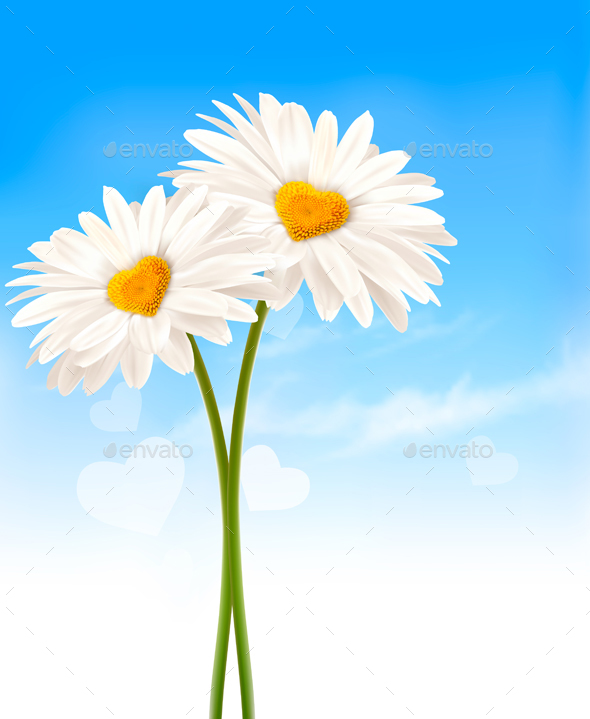 Two Daisies with Heart Shaped Middles - Flowers & Plants Nature