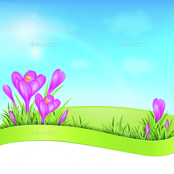 Violet Crocus and Green Grass - Flowers & Plants Nature