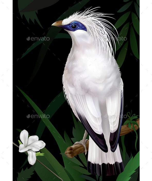 Bali Myna Leucopsar Rothschildi - Animals Characters