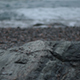 Rocks in front of the Sea - VideoHive Item for Sale