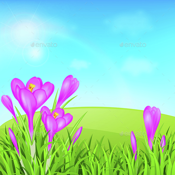 Violet Crocuses and Green Grass - Flowers & Plants Nature