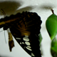 Butterfly Farming - VideoHive Item for Sale