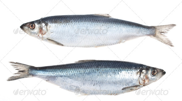 Herring - Stock Photo - Images