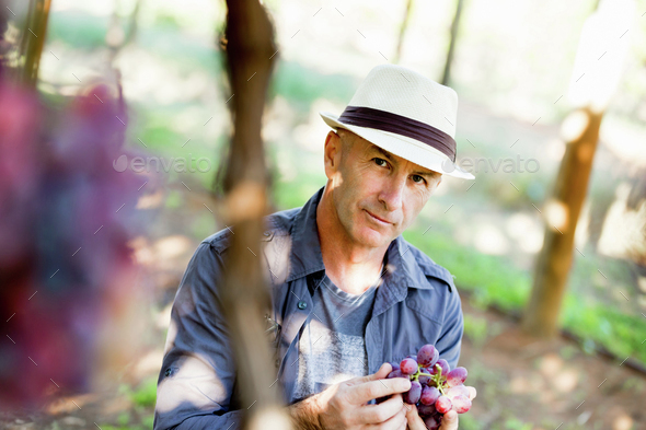 Man standing in vineyard - Stock Photo - Images
