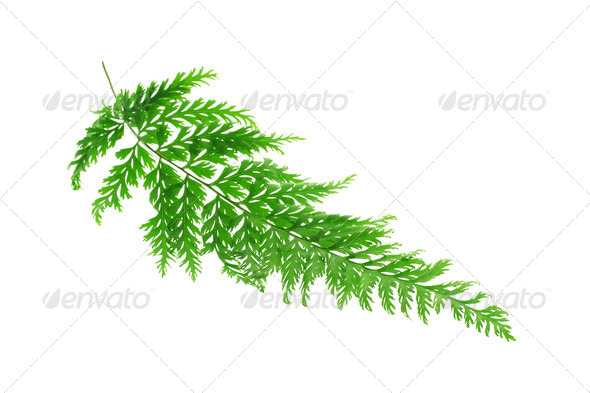 Tropical fern leaf - Stock Photo - Images