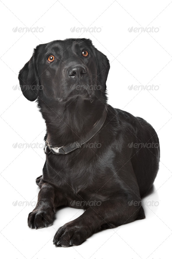 dog - Stock Photo - Images