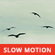Seagulls Flying  - VideoHive Item for Sale