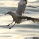 Flock Of Birds On Blue Sky - 12